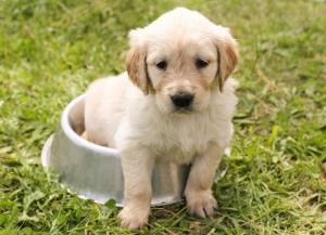 Cibo per cani, ciotole per cani, cibo per cani, cibo per cani